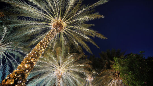 The Holidays Come to Boca Bayou